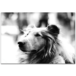 Casual Wall Art 'Loyal Friend' - Wildlife Decor on Metal or Plexiglass