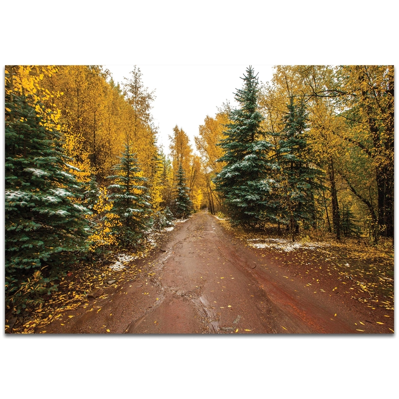Landscape Photography 'Road Less Traveled' - Autumn Trees Art on Metal or Plexiglass