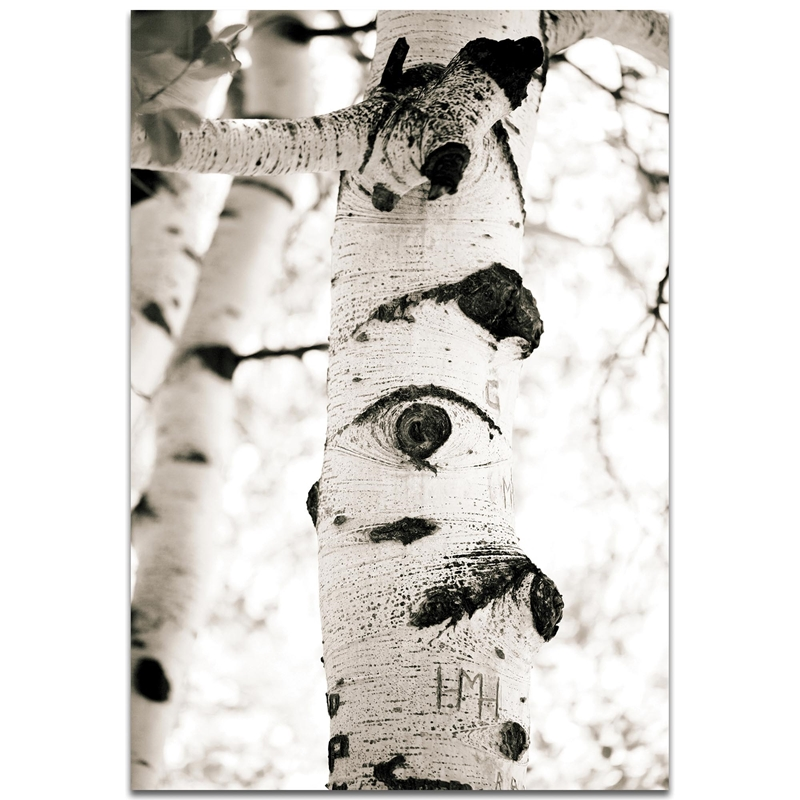 Landscape Photography 'Aspen Eyes' - Nature Scene Art on Metal or Plexiglass