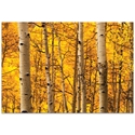 Landscape Photography 'Aspen Gold' - Autumn Nature Art on Metal or Plexiglass - Image 2