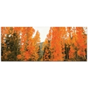 Landscape Photography 'Aspen Fire' - Autumn Nature Art on Metal or Plexiglass