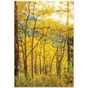 Landscape Photography 'Aspen Path' - Autumn Nature Art on Metal or Plexiglass - Image 2