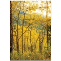 Landscape Photography 'Aspen Path' - Autumn Nature Art on Metal or Plexiglass