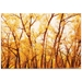 Landscape Photography 'Fall Trees' - Autumn Nature Art on Metal or Plexiglass - Image 2