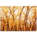 Landscape Photography 'Fall Trees' - Autumn Nature Art on Metal or Plexiglass