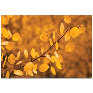Nature Photography 'Yellow Leaves' - Autumn Leaves Art on Metal or Plexiglass