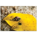 Nature Photography 'Hermit Life' - Hermit Crab Art on Metal or Plexiglass - Image 2