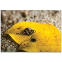 Nature Photography 'Hermit Life' - Hermit Crab Art on Metal or Plexiglass