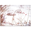 Nature Photography 'Red Buds' - Winter Blossom Art on Metal or Plexiglass - Image 2