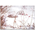 Nature Photography 'Red Buds' - Winter Blossom Art on Metal or Plexiglass
