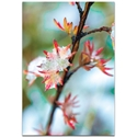 Nature Photography 'Icy Autumn' - Winter Blossom Art on Metal or Plexiglass