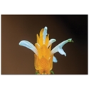 Nature Photography 'White and Gold' - Flower Blossom Art on Metal or Plexiglass - Image 2