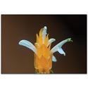 Nature Photography 'White and Gold' - Flower Blossom Art on Metal or Plexiglass