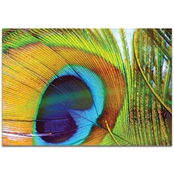 Contemporary Wall Art Peacock Colors - Wildlife Decor on Metal or Plexiglass
