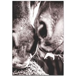 Contemporary Wall Art Horse Kiss - Wildlife Decor on Metal or Plexiglass