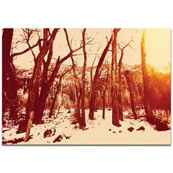 Landscape Photography Sepia Snowfall - Winter Trees Art on Metal or Plexiglass