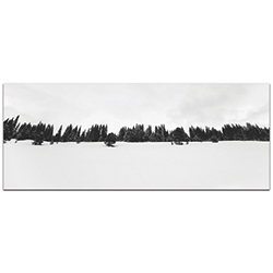 Landscape Photography Life Line - Winter Trees Art on Metal or Plexiglass