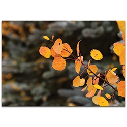 Nature Photography Autumn Branch - Autumn Leaves Art on Metal or Plexiglass