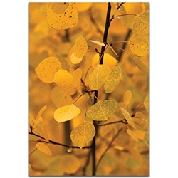 Nature Photography Turn to Gold - Autumn Leaves Art on Metal or Plexiglass