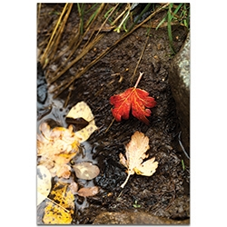 Nature Photography Red Leaf - Autumn Leaves Art on Metal or Plexiglass
