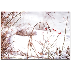 Nature Photography Red Buds - Winter Blossom Art on Metal or Plexiglass