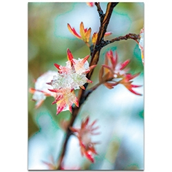 Nature Photography Icy Autumn - Winter Blossom Art on Metal or Plexiglass