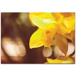 Nature Photography Golden Bloom - Flower Blossom Art on Metal or Plexiglass