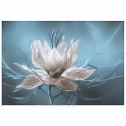 Ice Flower by Mandy Disher - Frozen Flower Image on Metal or Acrylic