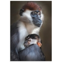 Tired Monkey by Carles Just - Monkey Wall Art on Metal or Acrylic - Alternate View 2