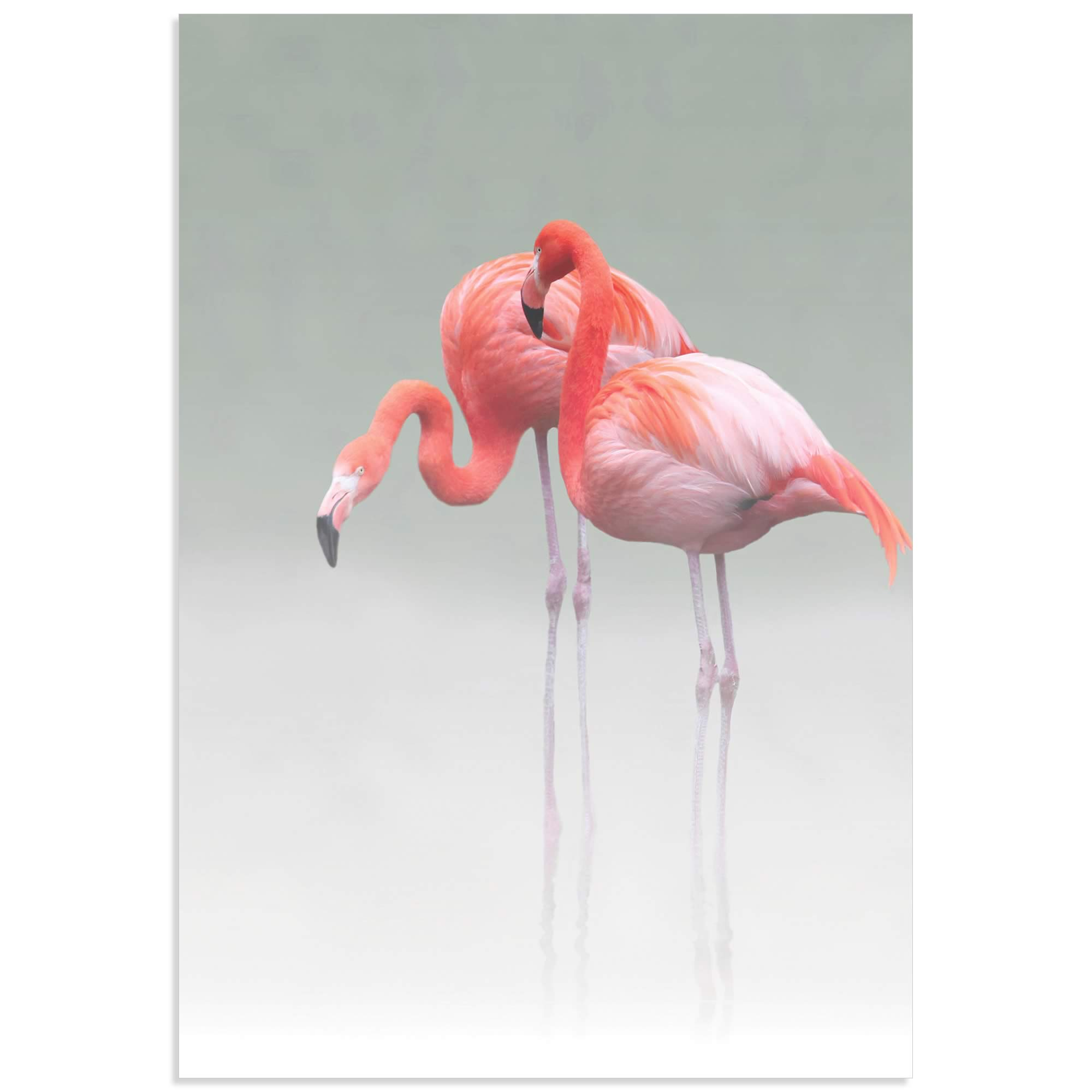 Just We Two Flamingos by Anna Cseresnjes - Pink Flamingo Art on Metal or Acrylic