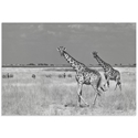 Savanna Favorites by Mathilde Guillemot - Giraffe and Zebra Art on Metal or Acrylic