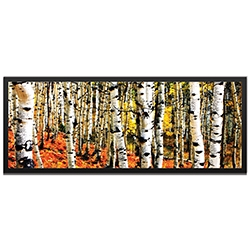 Eric Waddington Aspen Grove Framed 48in x 19in Landscape Photography Trees Art on Colored Metal