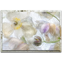 Mandy Disher Anemone Frost 32in x 22in Modern Farmhouse Floral on Metal