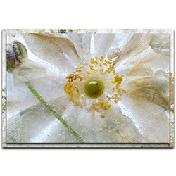 Mandy Disher Floral Freeze 32in x 22in Modern Farmhouse Floral on Metal