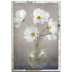 Mandy Disher Simply Cosmos 22in x 32in Modern Farmhouse Floral on Metal