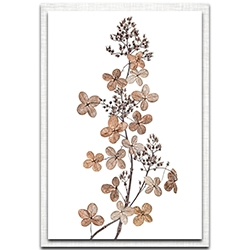 Mandy Disher Hydrangea Paniculata 22in x 32in Modern Farmhouse Floral on Metal