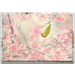 Takashi Suzuki Cherry Blossom Color 32in x 22in Modern Farmhouse Floral on Metal